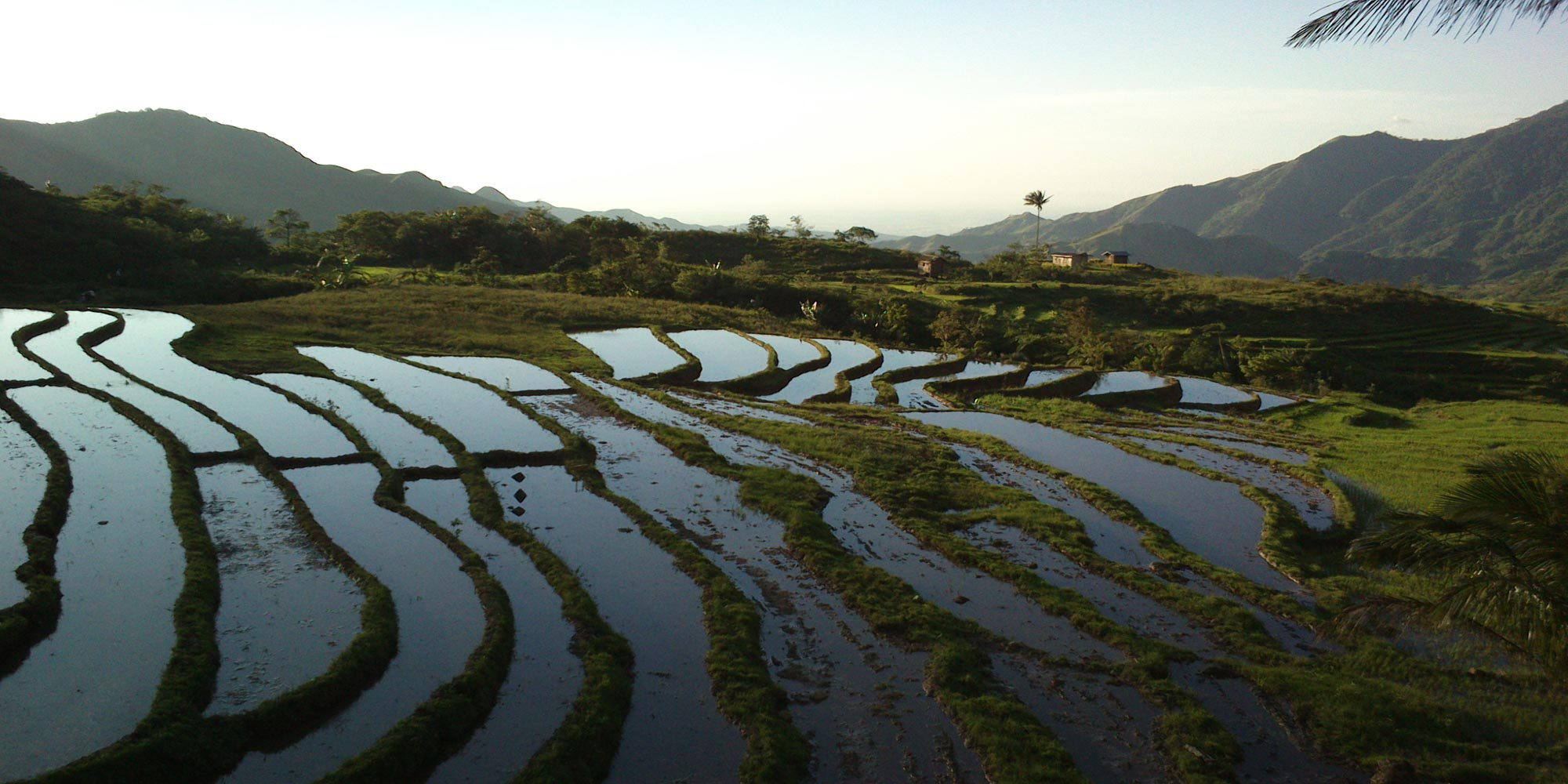 Rice terrace in Negros Island during our bike adventure tours