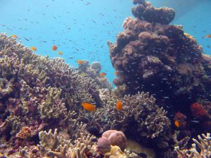 Corals and fishes at Tongo Point Moalboal